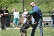 Kent Police K9 Demontrating Takedown at Competition